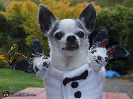 Animal Halloween Costumes 125 Pets Images Animal Costumes Pet Costumes