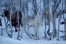 reindeer santa names