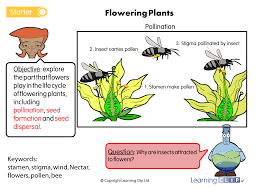 3p6 ws 6 science a year 3 science worksheet