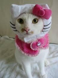 Kitten Halloween Costumes Pet 17 Fun Pet Halloween Costumes Images Animals