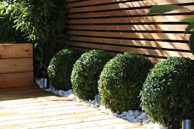 round scrubs against contrasting linear fence gardening
