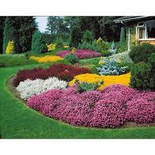 miroir jardin d ulysse déco jardin hiver plantes maison 32 calais 19191726 depot
