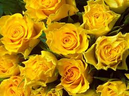 beautiful flower images top 30 beautiful yellow flowers names list with pictures