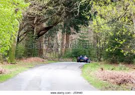 bolderwood arboretum ornamental drive stock photos bolderwood