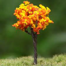 discount bonsai orange tree 2017 bonsai orange tree on sale at