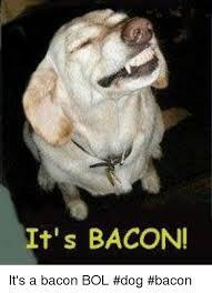 Dog Bacon Meme - it s bacon it s a bacon bol dog bacon meme on me me