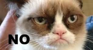 Angry Cat Meme No - angry cat no meinafrikanischemangotabletten