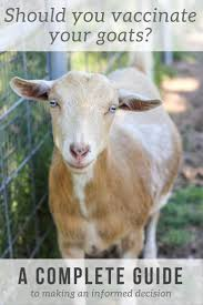 9 best 4h goats images on pinterest anatomy body parts and dairy