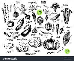 ink sketch vegetables hand lettering names stock vector 450856513