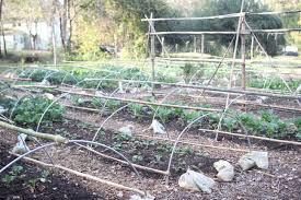 Deer Proof Fence For Vegetable Garden Cccg News Carolina Campus Community Garden Page 2