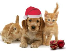 pet christmas wilson veterinary avoiding christmas catastrophes