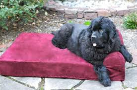Tempur Pedic Dog Bed Could Your Dog U0027s Bed Be Causing Joint Pain Here U0027s How To Tell