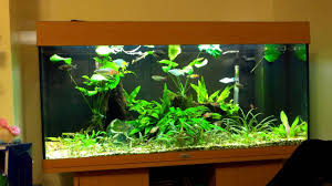 aquarium beautify your home with unique aquascape designs