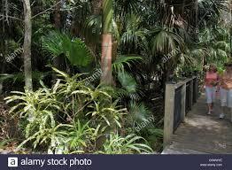 orlando florida harry p leu gardens palm trees tropical plants