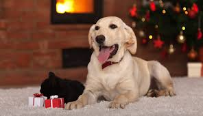 Cottages That Allow Dogs by Pet Friendly Dogs Welcome Self Catering Country Cottages And