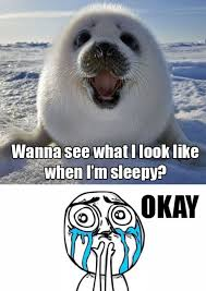 Harp Meme - that s so meme baby harp seal conversations