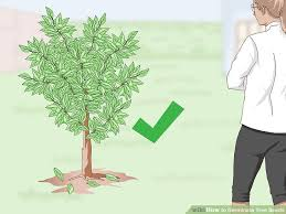 3 ways to germinate tree seeds wikihow