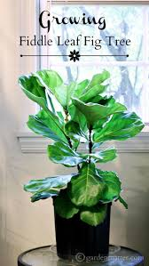364 best house plants for me images on pinterest indoor