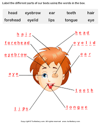 human face parts name worksheet turtle diary