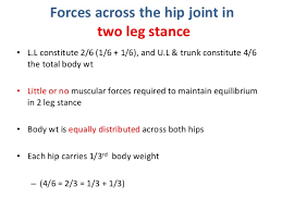 hip biomechanics