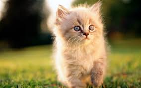 desktop hd pictures of cats and kittens