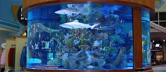 custom aquariums reef tanks aquarium start up service custom