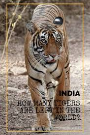 Home Interior Tiger Picture How Many Tigers Are Left In The World Travel2next