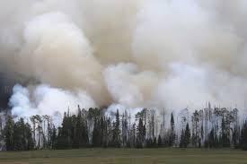 Wildfire Weed by Utah Brian Head Wildfire Forces Evacuations Al Jazeera