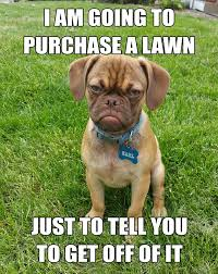 Grumpy Meme Face - the 10 best memes of grumpy dog this dog s life dog