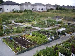 Garden Allotment Ideas Pin By Robert On Raised Bed Gardens Pinterest Community