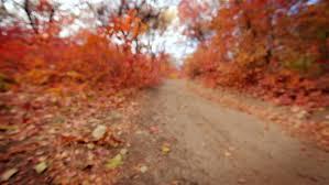 colorful autumn forest alley focus bokeh focus