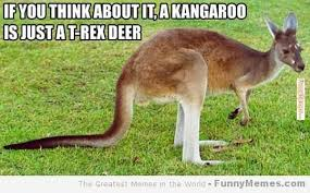 Funny T Rex Meme - 45 most funny kangaroo meme photos and images