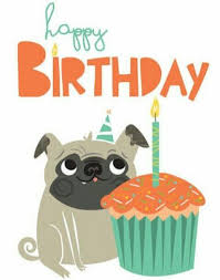 Happy Birthday Pug Meme - праздники праздники pinterest happy birthday birthdays and