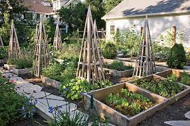 How To Plant A Vegetable Garden In Your Backyard by How To Plant A Vegetable Garden In Your Backyard Chicago