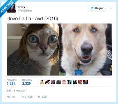 Dog Text By Memeemma Meme - pin by skylight imagen on humor para todos los públicos pinterest