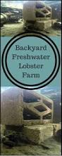 my backyard freshwater lobster farm u2026 pinteres u2026