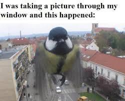 Yeeeaaahhh Meme - i guess its a puts on sunglasses birds eye view yeeeaaahhh imgur