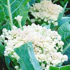 what to plant in your fall vegetable garden