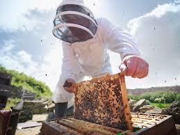 beekeeping for beginners step by step