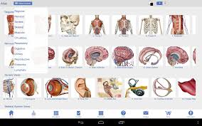 3d Human Anatomy Atlas Visible Body 3d Human Anatomy Inspiring 10 Best Ever Pictures