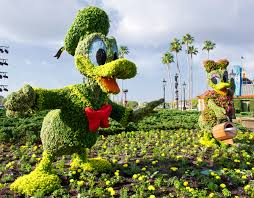 Flower Topiary Kermit And Miss Piggy Topiaries At Epcot International Flower