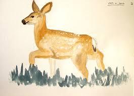 deer sketches wetcanvas