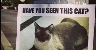 Missing Cat Meme - picture is this the best missing cat poster you have ever seen it