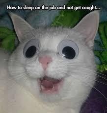 Googly Eyes Meme - 57 best giving googly eyes images on pinterest funny stuff