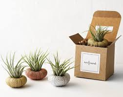 Desk Plant Crystal Air Plants Desk Accessories Birthday Gifts By Airfriend
