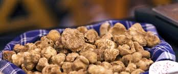where can you buy truffles where to buy white truffles in italy