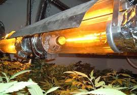 best hps grow lights advantages and disadvantages of hps grow lights and lps grow lights