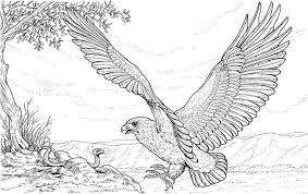 harpy eagle coloring page harpy eagle super coloring rainforest