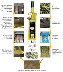 how is made olives south africa how olive is made olives south africa