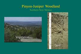 New Mexico vegetaion images The soil resource foundation of terrestrial ecosystems ppt jpg